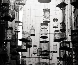 article, black and white, and cages image