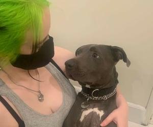 dog, eilish, and billie image