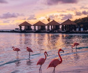beach, flamingo, and sunset image