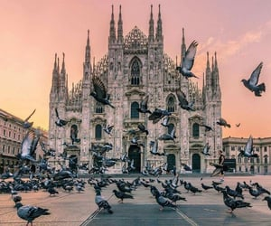 pigeon, travel, and city image