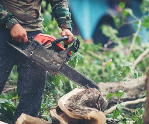 tree cutting san diego, san diego tree removal, and stump removal san diego image