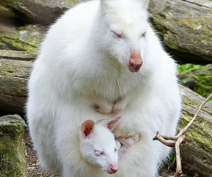 Albino Roo and Joey