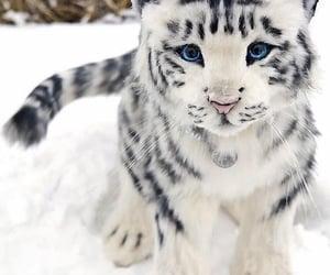 animal, snow, and cat image