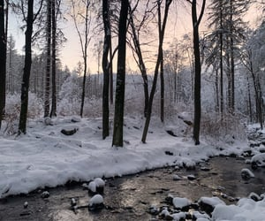 forest, ice, and icy image