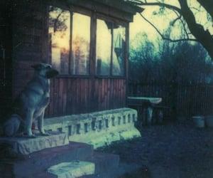 dog, house, and old photo image