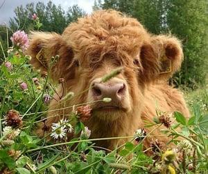 animal, cow, and cottagecore image