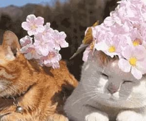 adorable, aesthetic, and cats image