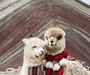Animales, naturaleza, and ternura image