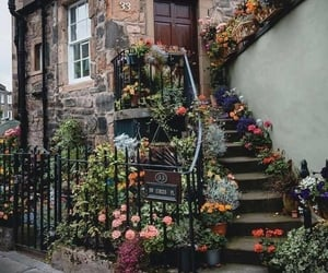 flowers, architecture, and city image