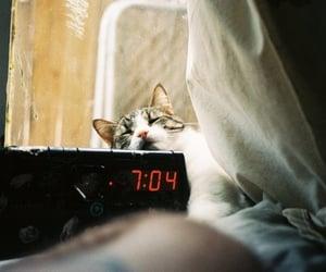 cat, clock, and sleepy image