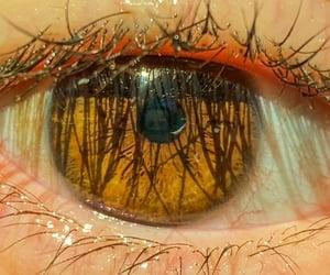 eyelashes, eyes, and natural image