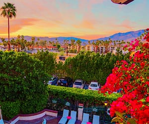 aesthetic, palm springs, and sun image