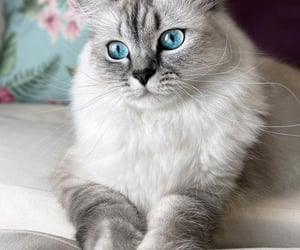 blue, cats, and gato image
