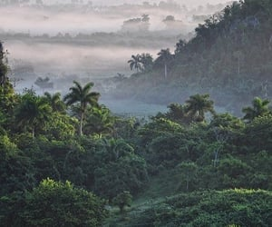 rainforest, travel, and traveller image
