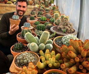 cactus, decor, and dishes image