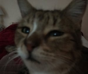 cat, cute cat, and cat meme image