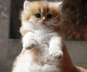 adorable, furry, and fuzzy image