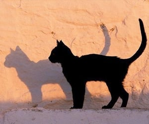 cat, black, and shadow image