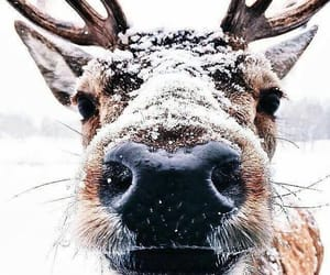animal, deer, and face image