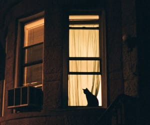 cat, animal, and night image