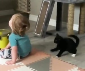 cats, funny video, and pets image
