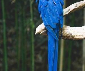bird, blue, and hyacinth image
