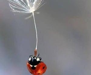 ladybug, hanging, and insect image