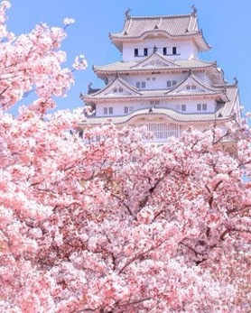 architecture, flowers, and japan image