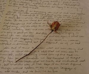 aesthetic, Letter, and rose image