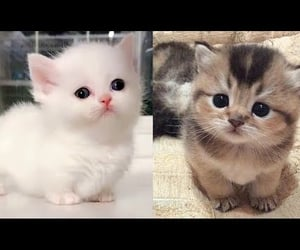 animals, baby, and cute cat image