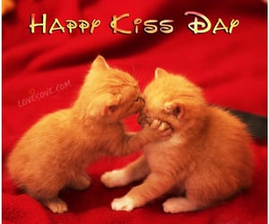 cats, couple, and cute image