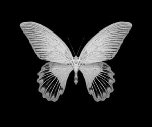 aesthetic, butterfly, and overlay image