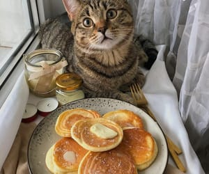 cat cats, fashion, and foodies image