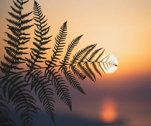 landscape, nature, and sun image