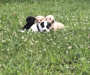 babies, doggies, and grass image