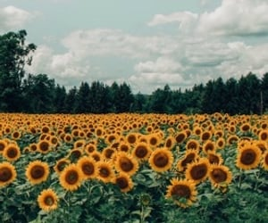 adventure, blooming, and countryside image