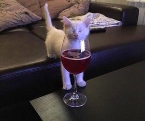 cat, wine, and kitten image