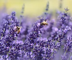 bee and honey image