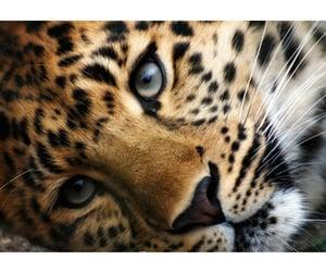 animal, cute, and aww image