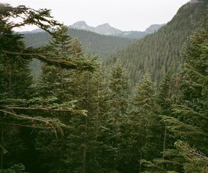 forest, green, and hills image