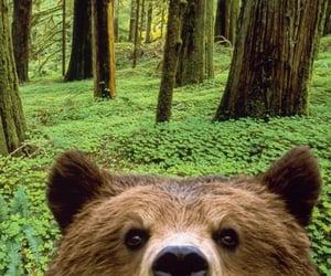 bears, bear, and clovers image
