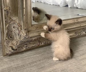 animal, cat, and mirror image