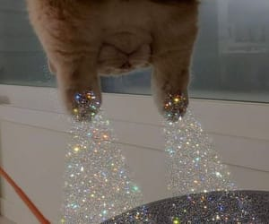 cats and glitter image