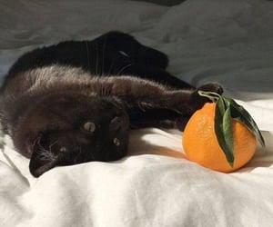 cat, animals, and black image