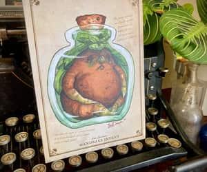 etsy, vintage botanical, and natural history image