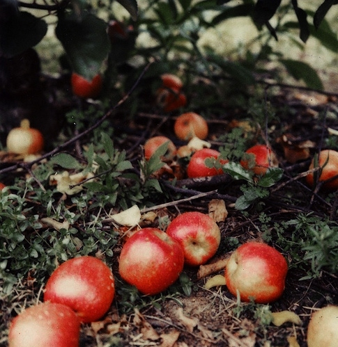 apple, leaves, and magical image