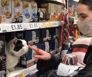 british, cute animal, and cat image
