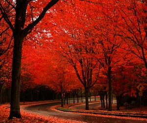 tree, red, and autumn image