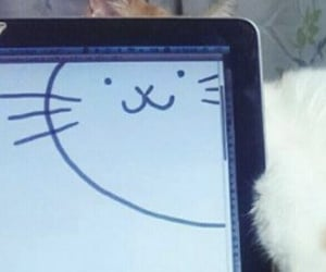 cat, header, and kitty image