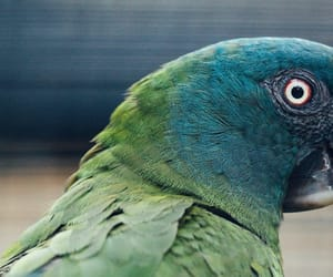 green, bird, and blue image